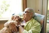 Dog old man