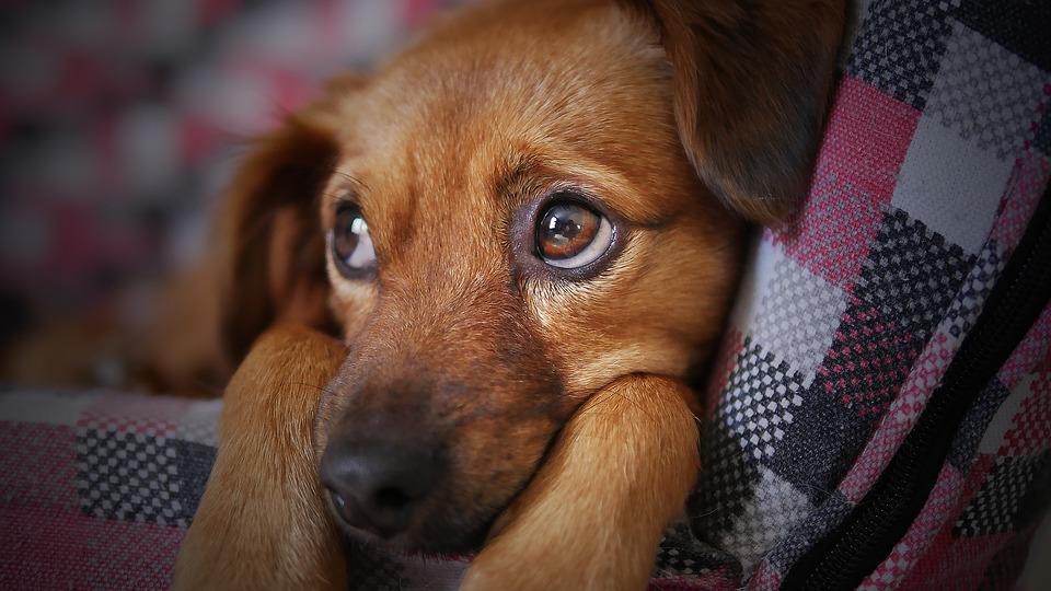 dog-3071334_960_720