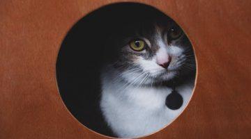 pet_camera