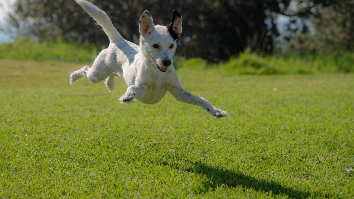 Best dog parks in Brisbane