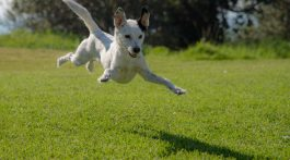 Best dog parks in Brisbane