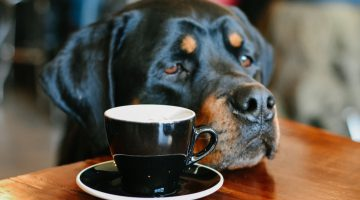 Dog friendly cafes Melbourne