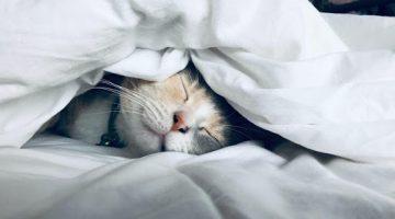 Cat's_habits