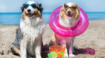 heat_stress_in_dogs
