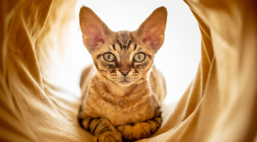 cat tunnels