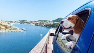 travelling with dog in car