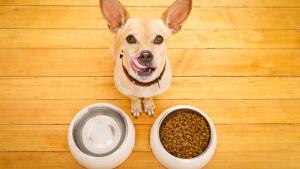 rawdogfood02